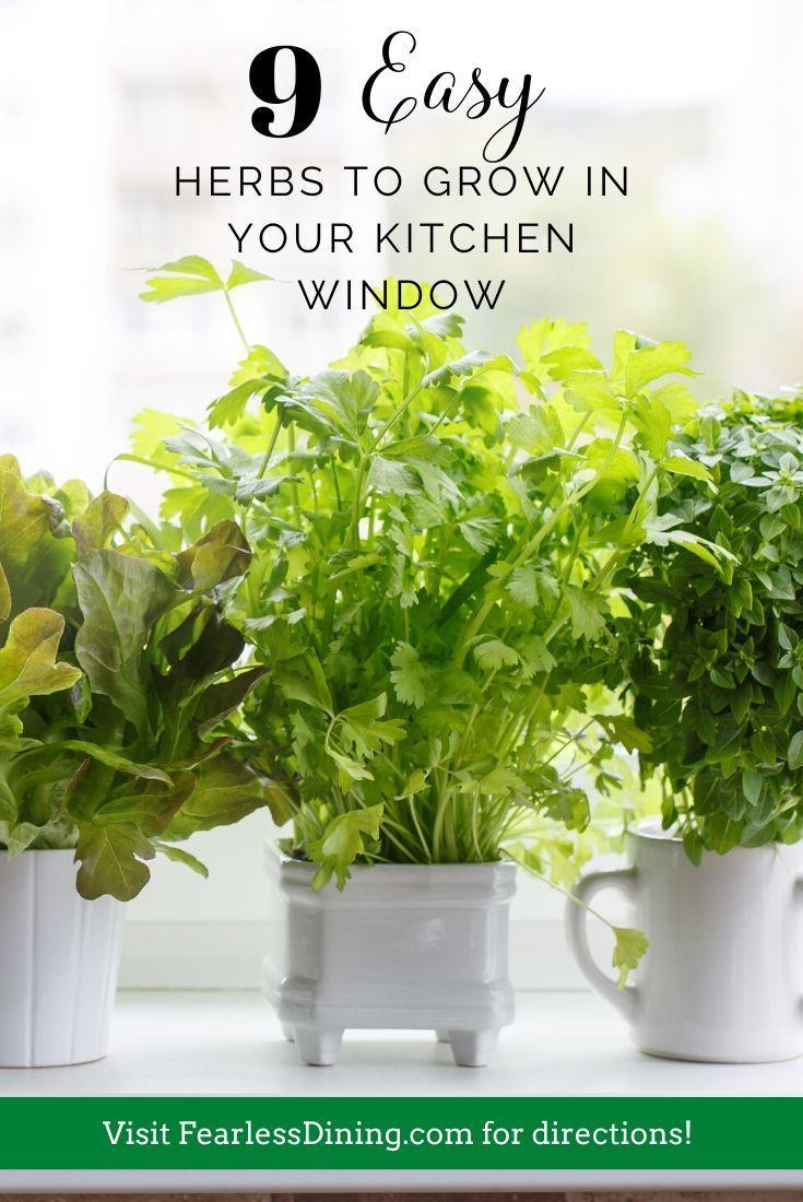 9 Easy Herbs To Grow Indoors In 2020 Easy Herbs To Grow Growing
