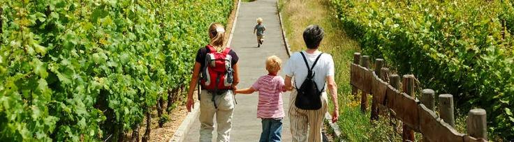 Degustazione Vini Toscana, Wine Tour Toscana, Visita in cantina e degustazione vini Toscana, Degustazioni Vini Toscani, Visite Cantine Toscana