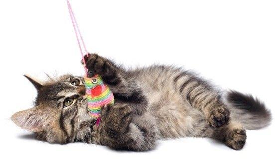 Kedi Oyuncakları | Kedi Maması, Köpek Maması, Fiyatları, Köpek, Kedi, Akvaryum, Kuş Haberleri