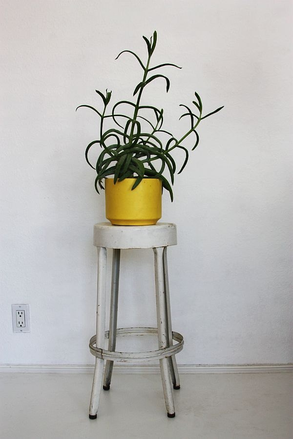 Industrial Stool as plant holder.  Nice