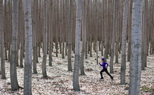 Open to runners just one day annually (for A Very Poplar Run 5-K/10-K on November 17), the GreenWood Tree Farm has 25,000 acres of poplars, bare and bewitching come winter. Blanketed by faded leaves, the flat terrain only enhances the forest's uniformity.