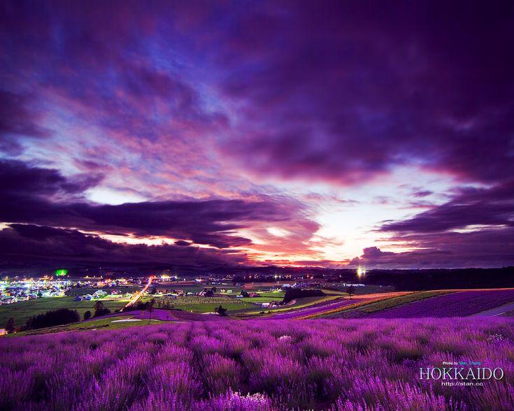 Lavender wallpaper purple world plain scenery wallpaper beauty in purple pinterest - World of color wallpaper ...