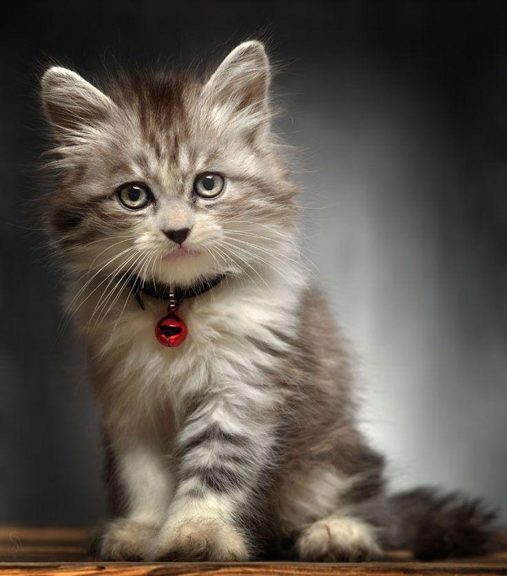 Кошки картинки для сотовых