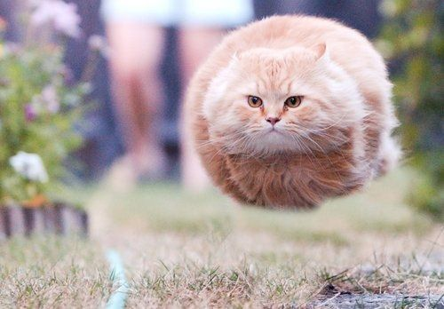 running cat, taken just at the right time so he looks like a speeding bullet. I find it hard to believe this wasn't photoshopped but it's still incredible. This makes me smile!!