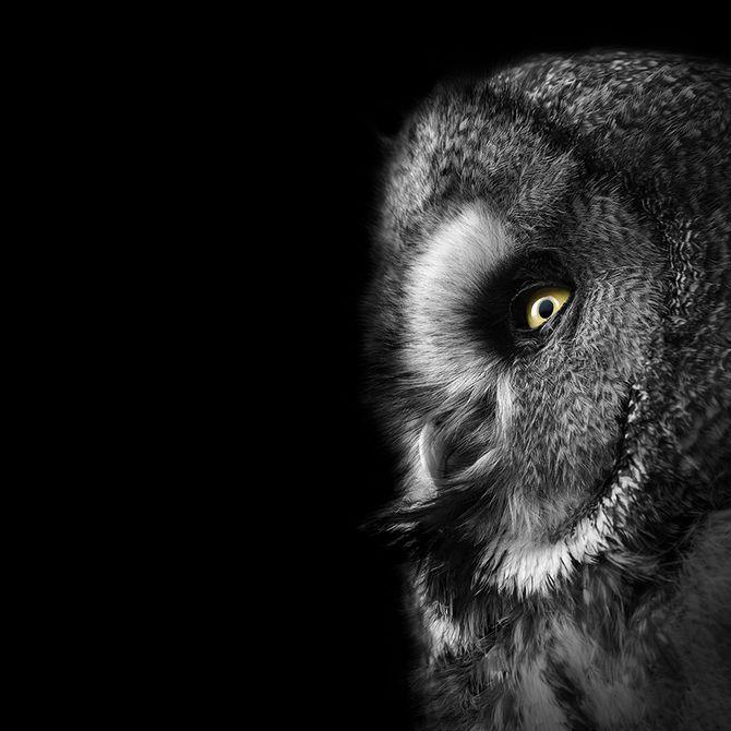 Фотографии животных от Lukas Holas