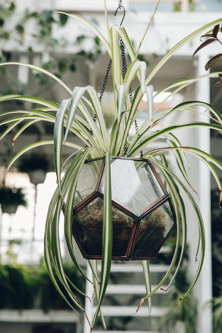 306 best csüngő csokrosinda images on pinterest spider plants