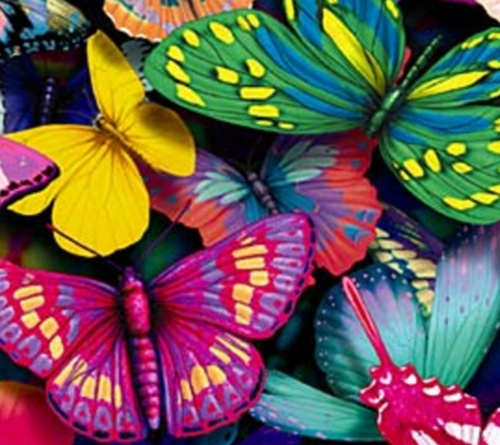 bright #butterflies - all the #colours