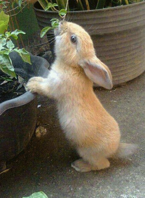A Cute Bunny Rabbit ~ Who Found Garden Delicacies!
