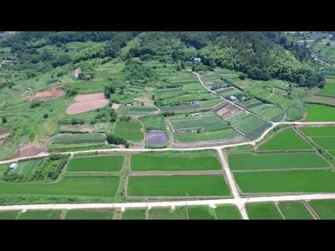 Padi Field Geoje Island - YouTube