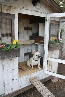 And every white painted garden shed needs a white French Bulldog - too cute!