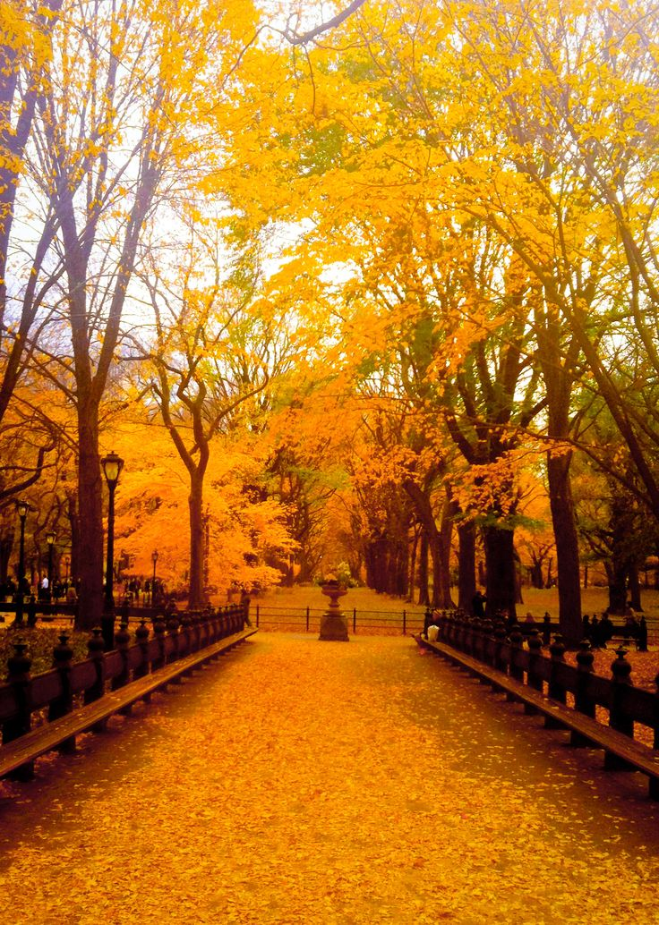 Saying Wallpaper Hd Central Park New York During Fall Beautiful Go To Www