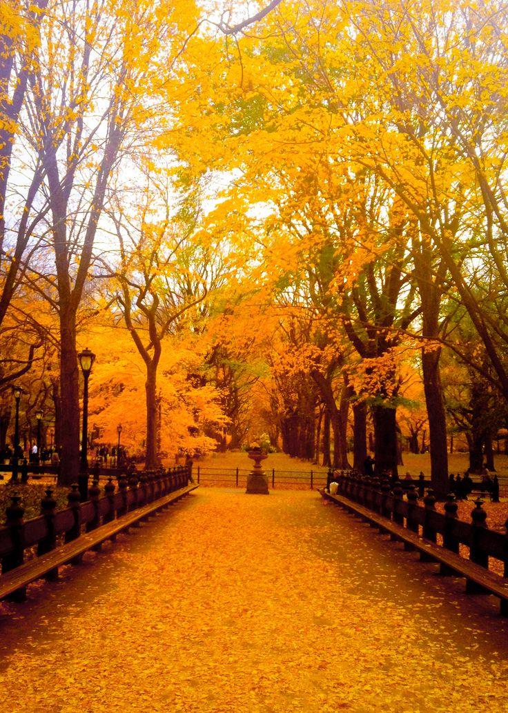 halloween park york haven