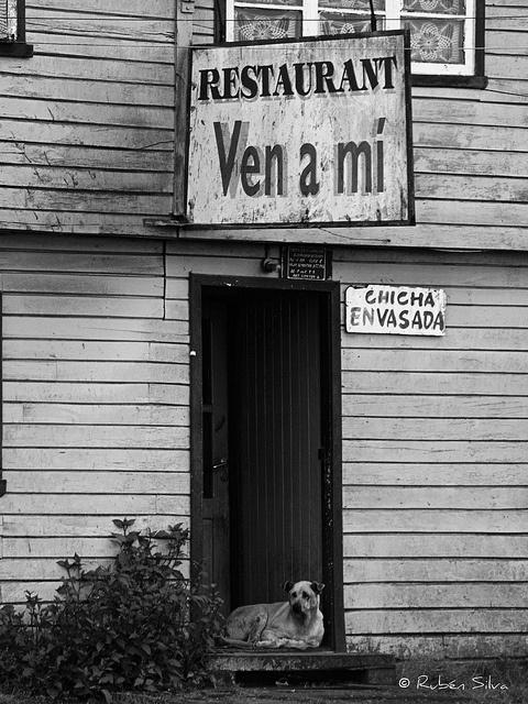 Ven a mi by isla chiloe, via Flickr