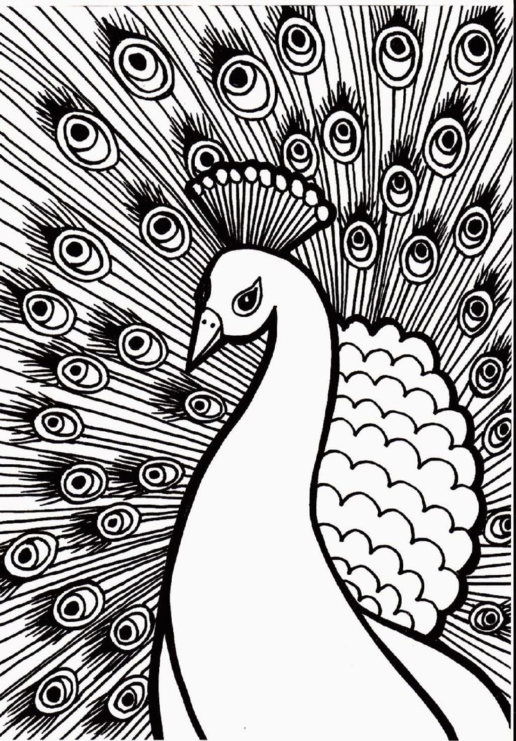 Abstract Bird Coloring Pages : Best coloring pages images on pinterest for