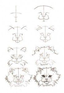 Como dibujar gatos (3)
