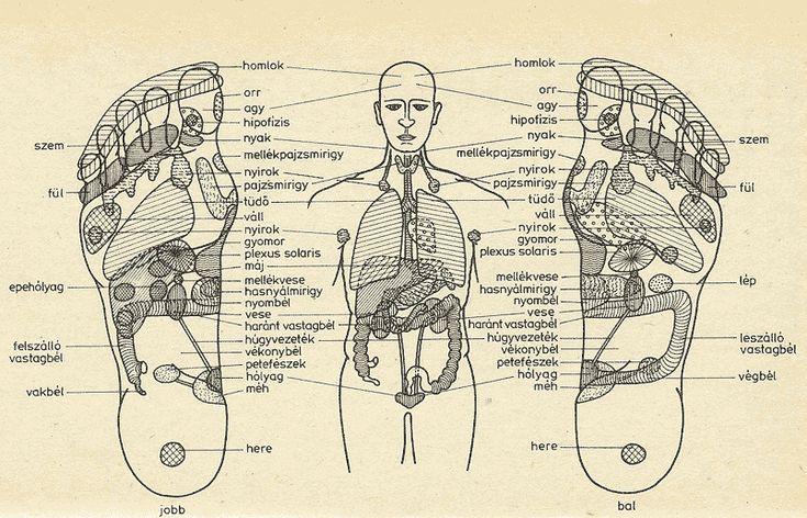 Gondolta volna, hogy a lába szinte mindent elárul önről? Pedig így van: egy jó szakember pontosan látja (vagyis érzi) a talpunkból, hogy milyen testi-lelki betegségben szenvedünk.