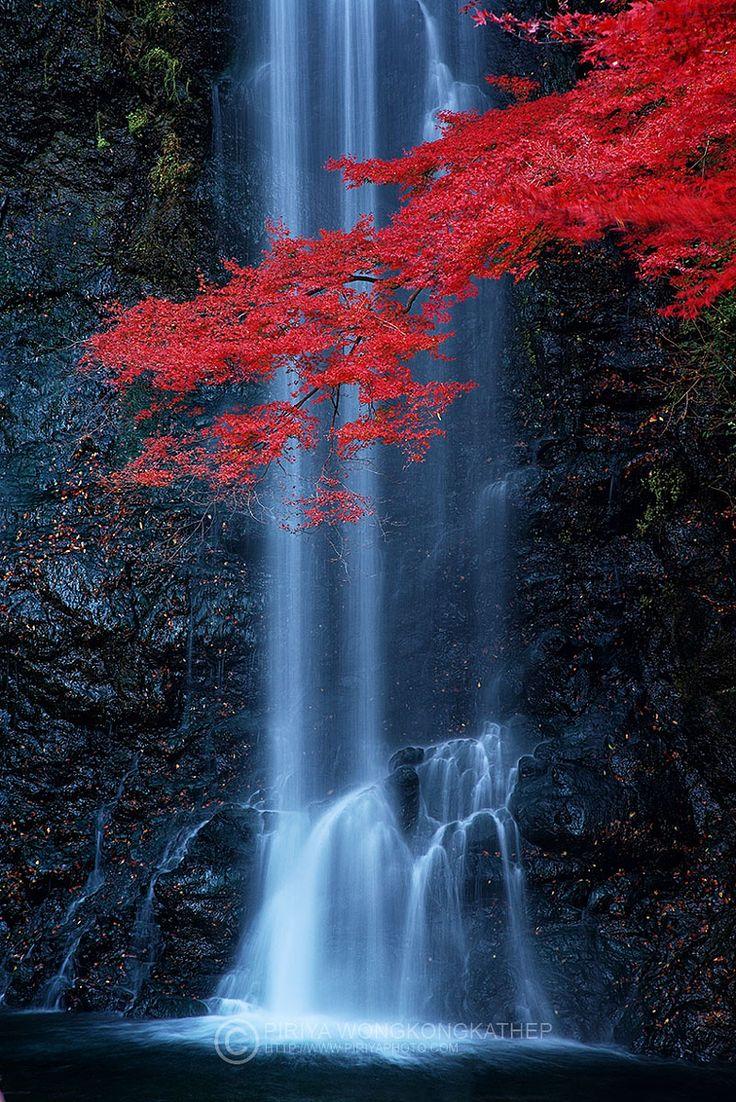 ~~Maple Falls | a classic autumn scene from Minoo waterfall, just outside Osaka, Japan | by Pete Wongkongkathep~~