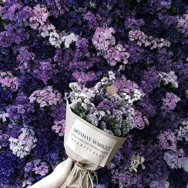 Algerienne Algeria Alger Algerie Dz Cadeaux Luxury Love Girly Rose Perpel Tulipes Purple Flower Bouquet Purple Flowers Flower Aesthetic