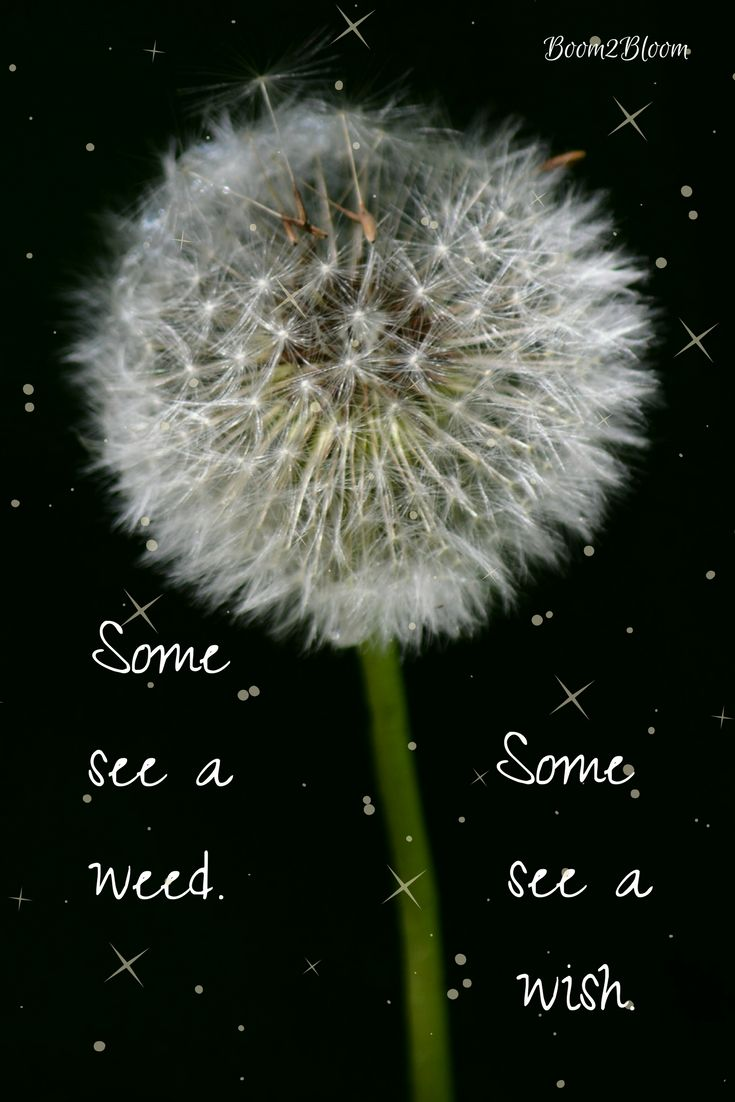 Some see a weed Some see a wish quote. Inspirational Quotes. Nature #InspirationalQuote #NatureQuote