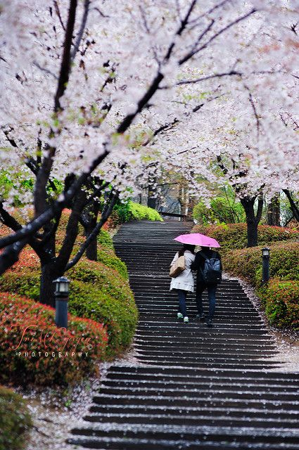 Couple in a rainy spring day | Location: Korea University | Flickr