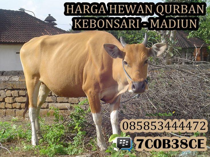 Informasi harga hewan qurban di Kebonsari Madiun