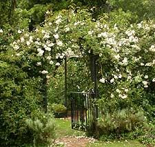 Le Jardin d'Angelique