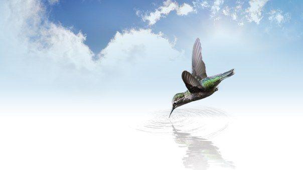 Colibrí, Aves, Volar, Ala, Aleteo