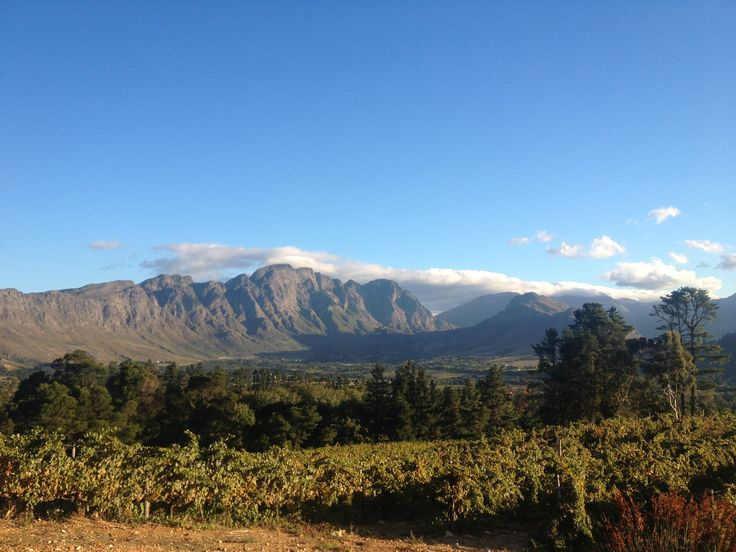 Wine Tasting in the Western Cape, South Africa