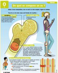 De quoi se compose un os ? - Mon Quotidien, le seul site d'information quotidienne pour les 10 - 14 ans !