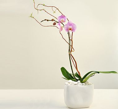 Buy some orchid flowers to decorate your home by theorchidcollection shop.