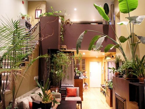 1000 images about house plants on pinterest my prayer for Prayer palm plant