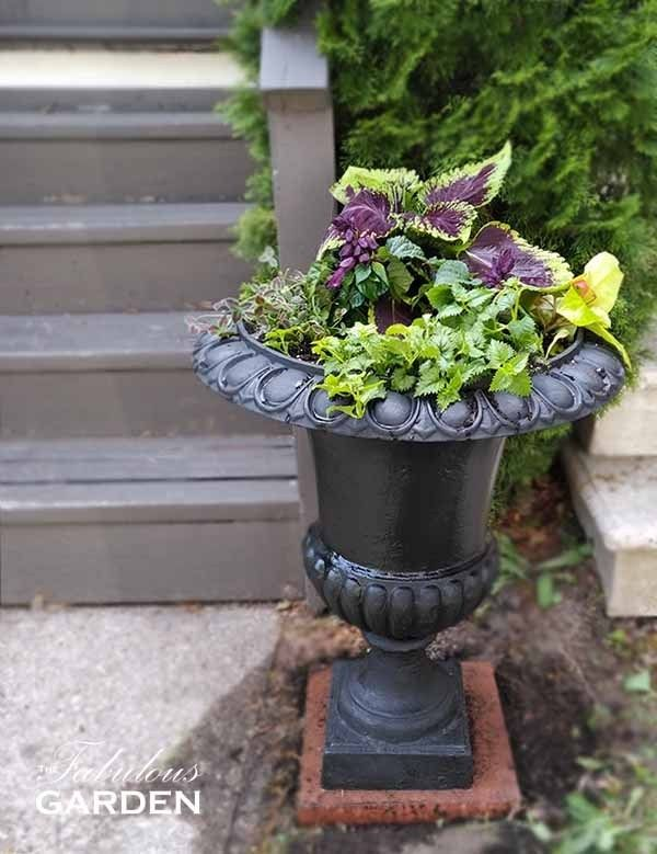 How To Paint A Cast Iron Urn The Fabulous Garden Iron Planters Cast Iron Urn Planters