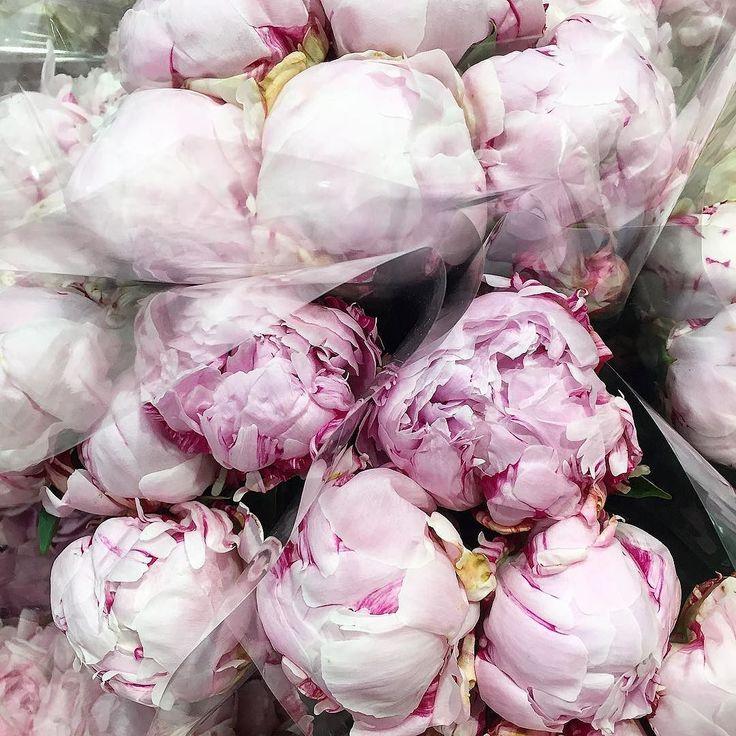 Happy weekend     #sydneyblogger #fwis . . . . #sydneylife #aussieblogger  #womenwithstyle #casualstyle #styleinspiration #fashioninspo #fashionblogger #fashionstyle #streetstyle #everydaystyle #streetstyleluxe #flowers #fashioninspiration #fashionpost #lookoftheday #ootd #womensfashion #flowerstagram #bloggerfashion #currentlywearing #sydneyfashionblogger #instastyle #fashionblog #styleblog
