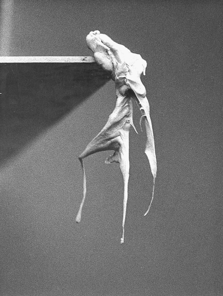 The sculpture in this photograph was made from a piece of gum that the artist had been chewing!    Alina Szapocznikow: Sculpture Undone, 1955-1972.