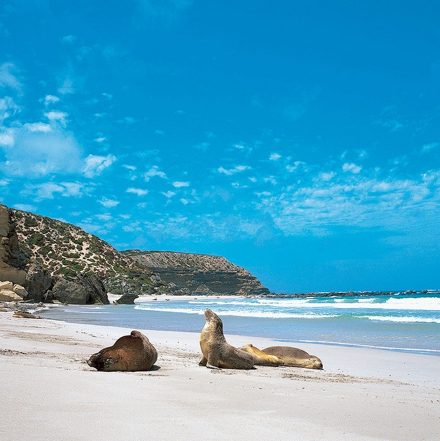 Kangaroo Island - The wildlife is amazing and spotted nearly every native Australian animal bar the Platypus who managed to evade us. Amazing walks, fabulous beaches and the most colourful birds. Well worth a visit.