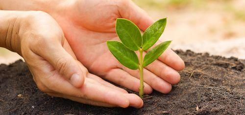 Como Sembrar Plantas En El Jardín.  Para que sepas como sembrar plantas en el jardín es necesario que tengas en cuenta algunos consejos y recomendaciones. Sembrar plantas en el jardín no es tan sencillo como muchas personas piensan. Sembrar no solo consiste en introducir ... Ver más aquí: https://jardinespequenos.com/como-sembrar-plantas-en-el-jardin/