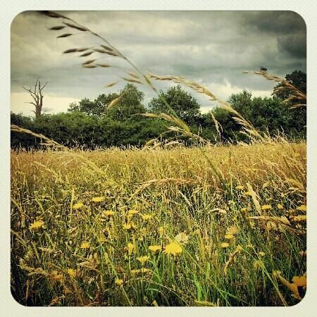 """Photo of Itchen Valley Country Park       """"Great park for the whole family  A fun day out for the entire family at this outdoor park that boasts a visitor's center, plenty of walking trails, children play areas and special events."""