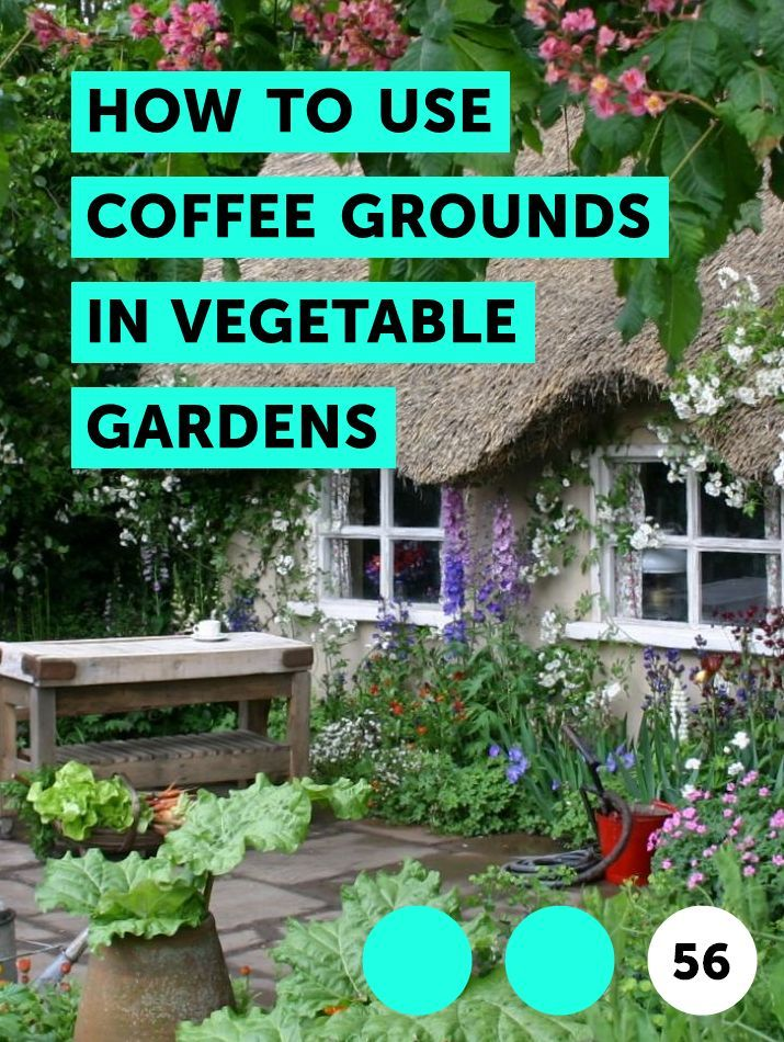 3b7ef07fa2564e305fd4dc80b154f65e - Coffee Grounds Good For Vegetable Gardens