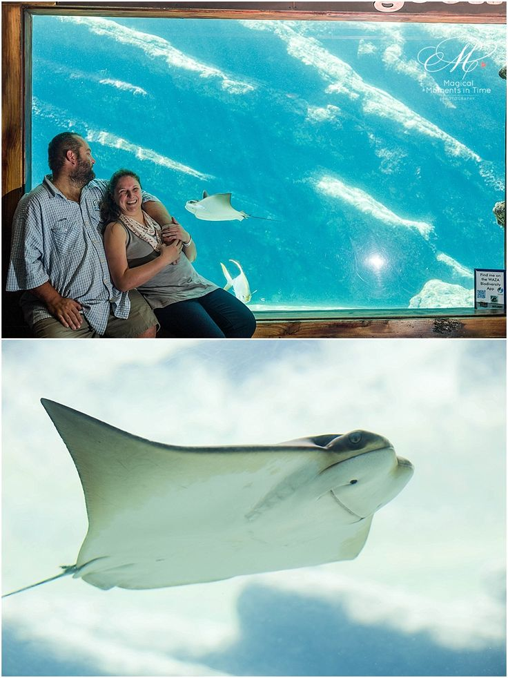 ushaka-aquarium-durban-engagement-photography-stingray