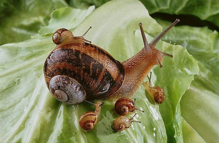 106 best images about Fibonacci Sequence on Pinterest ...