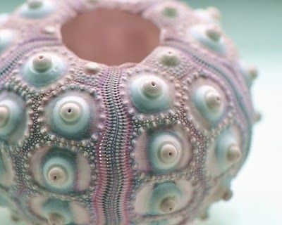 Spines are the first line of physical defense for a sea urchin.  The spines are constructed of calcium carbonate secreted over a scaffolding of protein.   The spines are sited, ball-and-socket fashion, on bumps on the test and, through the action of muscles attached around the circumference of the spine, can be moved through any angle in any direction. http://dandyvonnuetzen.blogspot.co.uk/2012/09/urchin-style-for-louis-vuitton.html