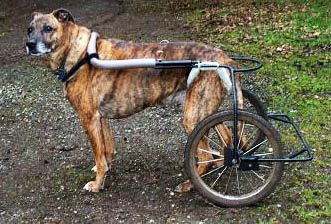"""home made dog wheelchairs - tons of inspiration for pets who need assistance, but whose owners may not be able to spend $500 on a pre-made """" pet wheelchair"""""""