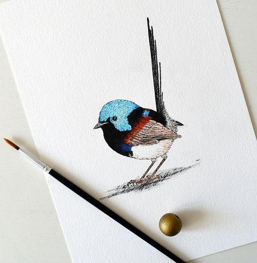 Modropláštník proměnlivý - originál