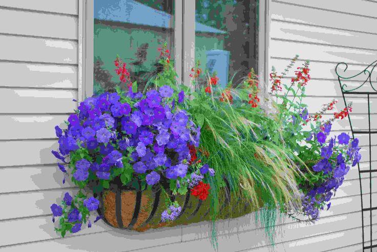bac à fleurs rouges, pétunias violets et graminées d'ornement