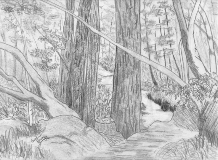 Pond drawing pencil google search