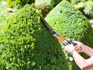 When To Prune Trees, Shrubs, and Plants - Pruning Tips and Guide - Good Housekeeping