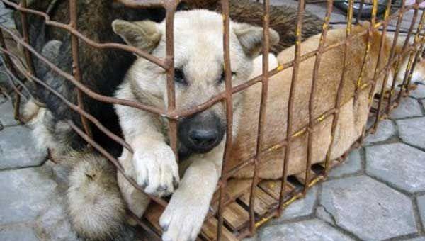 Santos sancionó la Ley contra Maltrato Animal