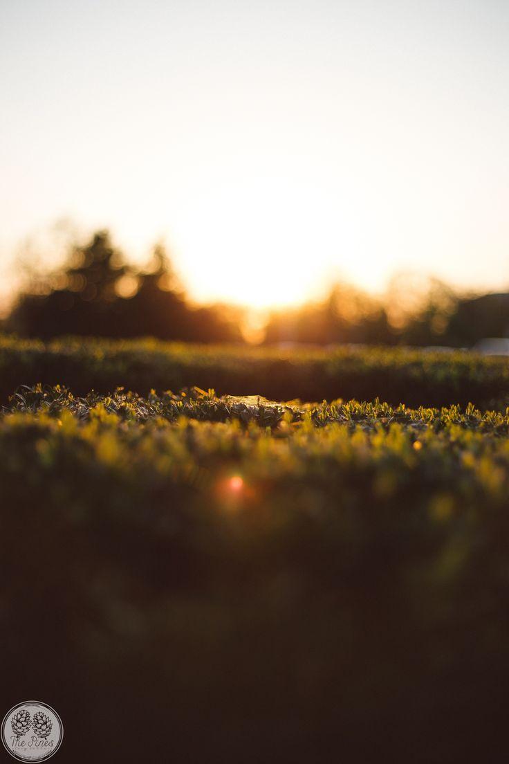 #sun #sunset #summer #joy