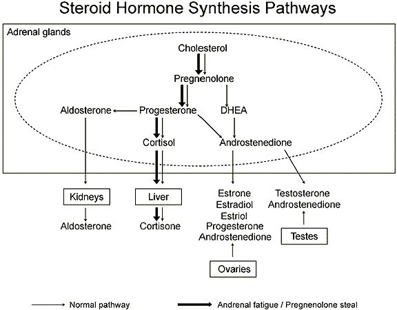 Basic explanation of how steroid hormones are synthesized