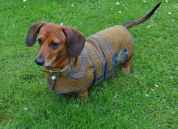 Lonan Tweed Dog Coat